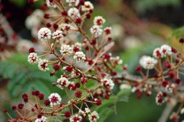 Herbs to Treat Hair Fall